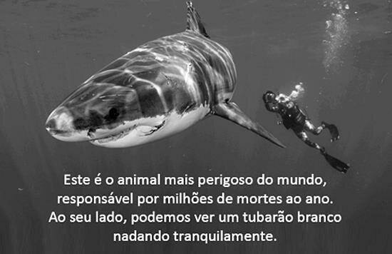 O Animal Mais Perigoso Do Mundo